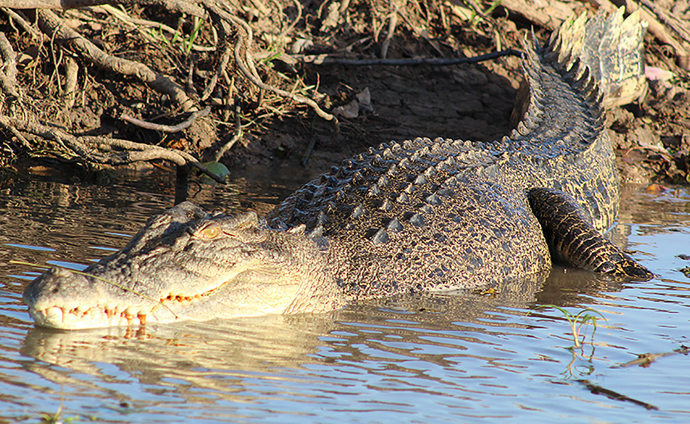 Kakadu: Cruising, Glamping and Clamping Crocs
